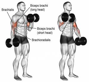 curl-biceps