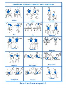 Exercices-de-musculation
