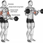 Travailler la base pour vos biceps avec les curls