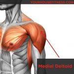 Musculation multi-angulaires, les clés du succès. Partie III, les épaules
