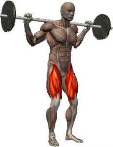 quadriceps-squat-prise-de-masse