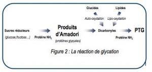 Produits d'Amadori - Glycation
