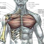 Localiser le haut pectoral avec l'entraînement multi-angulaires