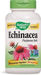echinacee-cancer