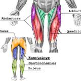 Article SuppVersity série EMG: Les meilleurs exercices pour des jambes et des mollets d'Hercule