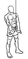 Triceps Pushdown (extension) à la corde