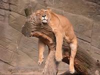 Le sommeil est essentiel à la récupération post-entraînement