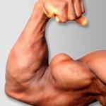 Pectoral interne, pic du biceps, etc... Une étude révèle que les parties proximales et distales des triceps grossissent indépendamment après un entraînement de résistance