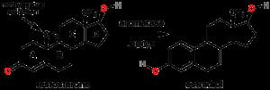 aromatase-hormones