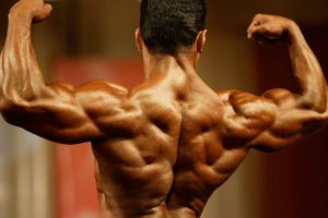 definition-musculaire