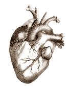La créatine maintient la souplesse des artères