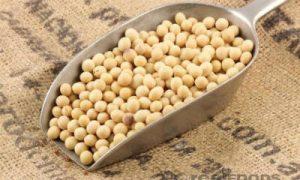 soja-graines
