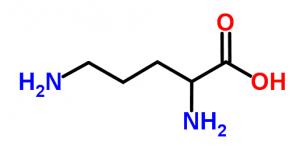 400 mg de L-Ornithine pourrait améliorer le sommeil