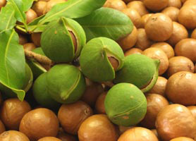 Noix de macadamia source d'Omega 7