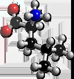 7,12 g de Leucine par jour réduirait la perte de muscle chez les personnes âgées