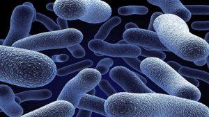 bactéres probiotiques