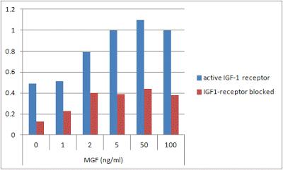 Prolifération cellulaire en réponse au MGF après blocage des récepteurs de l'IGF-1