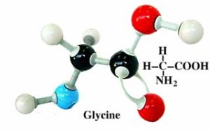 Si la Leucine ne stimule pas la croissance musculaire, essayez de l'associer à la Glycine