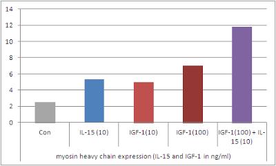 Chaine lourde de myosine et Interleukine 15 impliquée dans l'hypertrophie musculaire