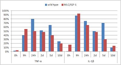 IGF-1-inflammation-et-croissance-musculaire