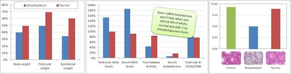 Taurine-et-testosterone-chez-des-rats-diabetiques