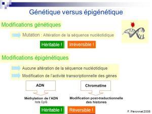 genetique-epigenetique