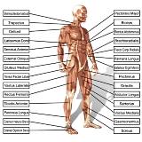 musculation-programme-d-entrainement
