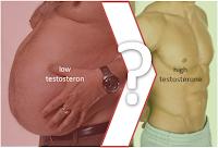 rapport-testosterone-masse-maigre-masse-grasse