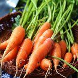 carottes-beta-carotene