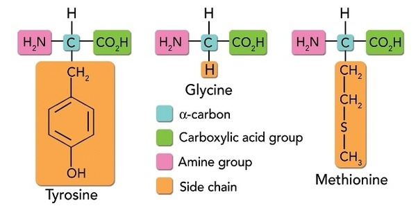 glycine-acide-amine