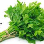 L'apigénine, l'anabolisant naturel du persil