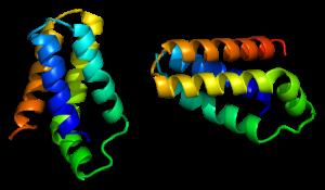 proteine-mtor