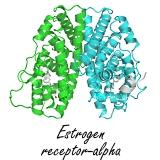 recepteur-oestrogene-alpha