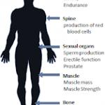 """Comprendre la Croissance Musculaire: Comprendre la """"Big T"""" ou comment la Testostérone programme les cellules souches à devenir des cellules musculaires..."""