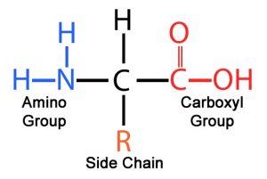 acide-amine