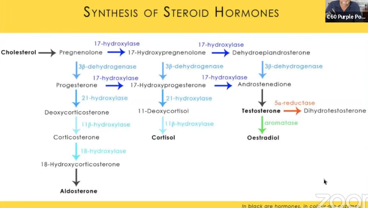 synthese-hormones-cholesterol