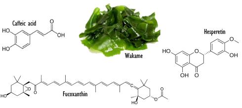wakame-acide-cafeique-fucoxanthine-hesperetine