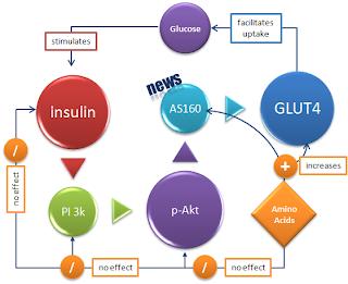 insuline-glut4