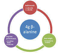 beta-alanine-composition-corporelle