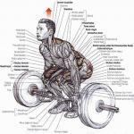 Etude EMG: Le soulevé de terre et le Hip-thrust se complètent parfaitement