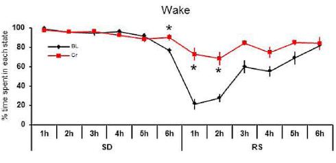 privation-sommeil-creatine