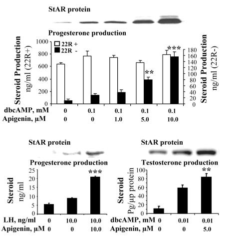 apigenine-proteine-star-testosterone
