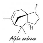 L'alpha-cédrène, un anabolisant d'un genre nouveau, issu de l'huile de cèdre.