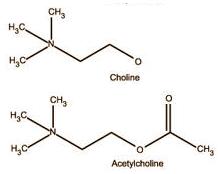 acetylcholine-choline