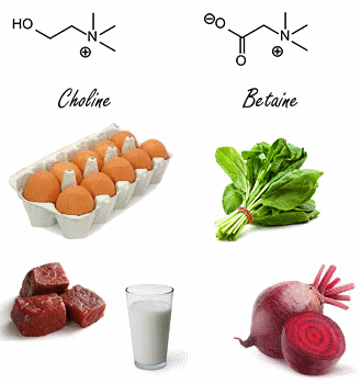 choline-betaine-structure-moleculaire