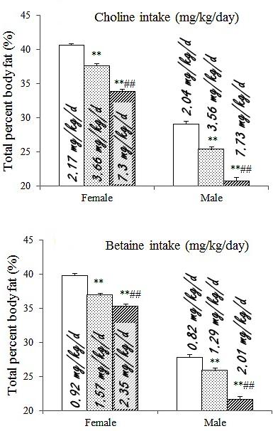 choline-betaine-masse-grasse