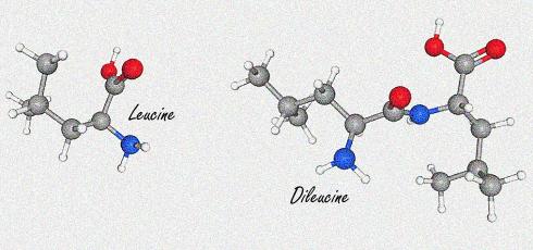 peptide-dileucine