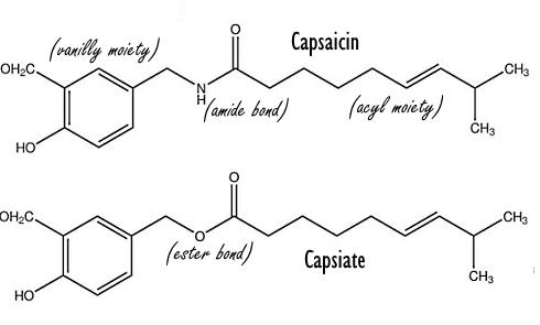 capsaicine-capsiate-molecules